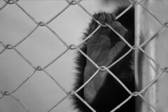 If only.. (ETphotographe) Tags: fence hope zoo trapped hand help trap meaningful