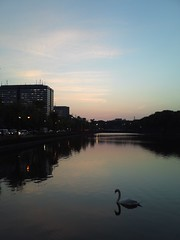 (swan in the moat) (Paul_ (shin.ogata)) Tags: hibiya  isw11k