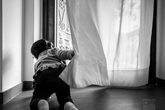 When Curiosity Begins (Daniele Pauletto) Tags: bw baby window bn curiosity bambina curiosit littlebaby