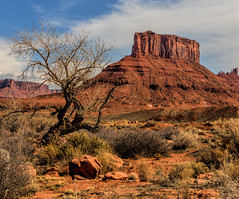 Lone Tree - Topaz Clarity Test (Jeff Clow) Tags: tree nature landscape buttle moabutah professorvalley theriverroad topazsoftware topazclarity tpslandscape topazclarityplugin
