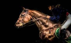 Show jumping (pattoise) Tags: horse caballo cheval chantilly showjumping vosplusbellesphotos mygearandme mygearandmepremium mygearandmebronze mygearandmesilver mygearandmegold mygearandmeplatinum mygearandmediamond vpu1 vigilantphotographersunite vpu2 vpu3