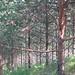 2013_on-top-of-the-tree-mountain_strata_c_q_xxx_e-1-a_z_img