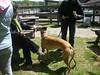 GreatBrookFarmMay92010029-1