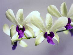 Orchid (xx573v3xx) Tags: film apartment mamiya645super epsonv700 kodakektar100 mamiya80mmf4macro
