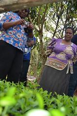 Day 2: Participants visit a model farm during the field visit. (International Livestock Research Institute) Tags: uganda ilri valuechains kampalauganda crp2 crp37 agrifoodchain