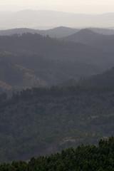 Black Hills (nicholasjon) Tags: mist southdakota blackhills haze hills daybreak