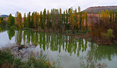 Los olmos del Duero (Jesus_l) Tags: espaa agua europa valladolid otoo sardndeduero roduero jesusl