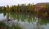 Los olmos del Duero (Jesus_l) Tags: españa agua europa valladolid otoño sardóndeduero ríoduero jesusl