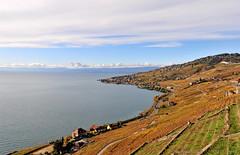 Du brun-jaune au bleu (Diegojack) Tags: automne eau lac corniche lman vignes paysages lavaux