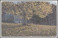 A Mock Seurat (brev99) Tags: autumn tree fall leaves maple filter saturation nik hue colorefex paintdaubes photoshopelements9 tamron28300xrdiif