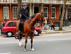 Policeman near Victoria station (xd_travel) Tags: london 2013 horse menatwork police horseman uniform