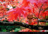 danbo_001 (iskandarbaik) Tags: park uk autumn trees england tree cute home forest toy photography leaf woods bokeh outdoor manga cardboard autumnal yotsuba danbo danbooru revoltech danboard cardbo danboru