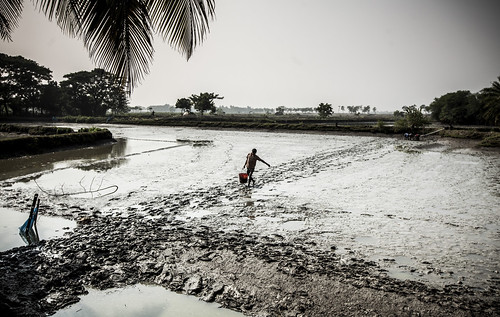 A man walks back with a bucket of shrimp through the swamp in Khulna, Bangladesh. Photo by Felix Clay/Duckrabbit.