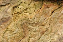 Swirl (MrHRdg) Tags: tree freeassociation woodland stump undulation curve molten kidmoreend greendeanwood
