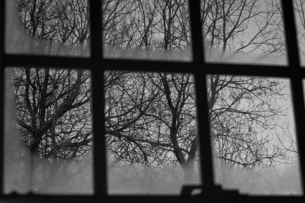 Misty Window by Suzanne Schroeter, on Flickr