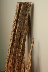Item C (goldenfield) Tags: goldenfield gfe agarwood aquilaria goldenfieldholdings