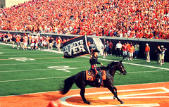oklahoma, orange country. (eveyrae) Tags: horse orange game college oklahoma sports cowboys football university stadium osu bullet fans stillwater cowgirl ncaa touchdown horsebackriding pokes oklahomastate almamater okie oklahomastateuniversity oklahomastatecowboys okstate tboonepickens