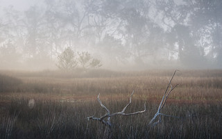 Light on a Foggy Marsh