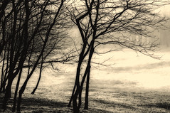 Every morning,,, (eggii) Tags: morning walk park trees cold mist fog project nikon d90 nikkor 55300mm eggii monday