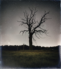 Dead Tree (MartinFechtner-Photography) Tags: tree baum dead tot sky night nightscape sterne stars universe milkyway lightpollution fine art