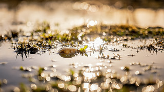 A wet spring sunset...