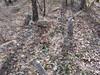 20170320_152115 (h.alfatli) Tags: bg 2017 mezar kabristan neofit bozveli bozvelievo alfatlı köyü momçilgrad