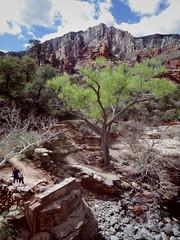 Slide Rock State Park (EllenJo) Tags: sedonaarizona oakcreekcanyon sliderock statepark arizona april2 2017 ellenjo sedona sliderockstatepark springtimeinaz springinaz springtime spring pentaxqs1 pentax