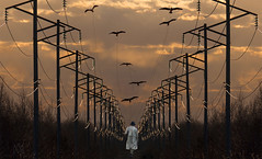 power line alley (marianna_a.) Tags: powerlines utility electricity sunset man walk birds fly flock kite string photoshop composite sliderssunday mariannaarmata