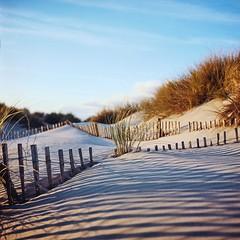 Dunes (yoannpupat) Tags: 6x6 portra160 tlr squareformat formatcarré rolleiflex france camargue