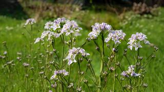 Wildflowers - Wildblumen