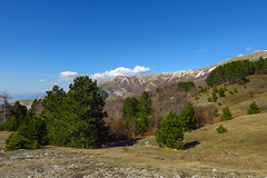 Crvanj Mountain, Bosnia and Herzegovina (HimzoIsić) Tags: mountain mountainside foothill forest conifer outdoor landscape