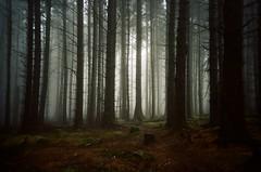 Atmosphere (iampaulrus) Tags: atmospheric forest 35mm 35mmfilmphotography film35mm film filmisnotdead filmphotography lomography lomo lca paulfargher paulfargherphotography analog analogue isleofman nature misty mist atmosphere