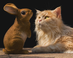 You have grown since I've last seen you, Easter bunny ! (FocusPocus Photography) Tags: linus katze kater cat chat gato tier animal haustier pet osterhase easter bunny