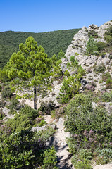 IMGP5232.jpg (jean.deines) Tags: cirquedemoureze herault moureze occitanie mourèze languedocroussillonmidipyrén france languedocroussillonmidipyrénées