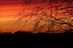 Abendrot / Afterglow (r.stopable1) Tags: abendrot sonnenuntergang natur nature landschaft baum silhouette dämmerung twilight himmel sky afterglow sunset landscape tree