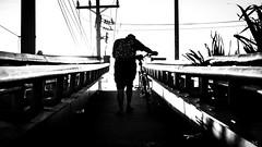 Partner (BNDC) Tags: monochrome job people blackandwhite street sunlight dramatic life dad happy family new bw bnw bike road manila city line leading light contrast summer