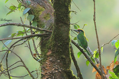 IMG_7703_DS (Ganugapenta NaveenKumar Reddy) Tags: northeast northeastindia mishmihills canon7d disnapper guyonblackybx gnaveenkumarreddy ganugapentanaveenkumarreddy gnr ganugapenta