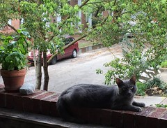 Teddy on The Porch (Philosopher Queen) Tags: teddy leo cat chat gato kitty bluecat graycat porch outside day storm