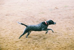 fly Lucy fly (jak.conrad) Tags: lucy twizzler dog dogs rainbowbridge heartbroken rescue pups dogislove mutt