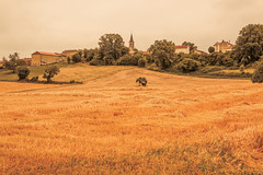 _Q9A5448 (gaujourfrancoise) Tags: france southwest sudouest charente fields champs été summer ocher ocre