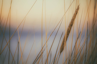 Beach grass sunrise