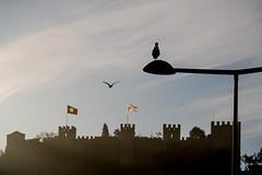 Silhouettes (Infomastern) Tags: castelodesaojorge lisboa lisbon lisboncastle lissabon portugal bird castle flag fågel silhouette siluett slott exif:model=canoneos760d geocountry camera:make=canon exif:isospeed=100 camera:model=canoneos760d exif:focallength=160mm exif:aperture=ƒ10 geolocation exif:lens=efs18200mmf3556is geostate geocity exif:make=canon