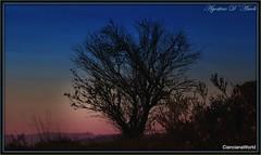 Alle prime luci del mattino con albero - Aprile-2017 (agostinodascoli) Tags: colore fullcolor agostinodascoli landscape paesaggi alberi nikon nikkor cianciana sicilia nature texture creative photoshop photopainting art digitalart digitalpainting piante cielo azzurro