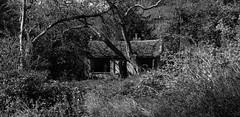 1920p 72dpi-7165 (reach.richardgibbens) Tags: bowland lancashire england uk littledale fell moorland moor valley dale