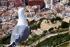 #alicante #valencia #repit #whit #you (K@rlixs) Tags: alicante valencia repit whit you