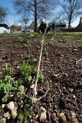 20170405-AMS-LSC-1986 (USDAgov) Tags: usda departmentofagriculture usdepartmentofagriculture peoplesgarden nationalmall washington dc planting seed sprout tools soil garden transplant plant align spring coolweather