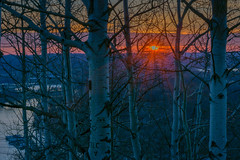 Birches on Barn Bluff (FJMaiers) Tags: birch trees sunset mississippi river red wing minnesota backlight