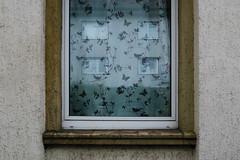 Windows in a Window (Arthur Koek) Tags: window windows reflection glass curtain ennepetal nrw deutschland germany