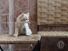 Ove_Marokko8 (overonning) Tags: cat cute marocco