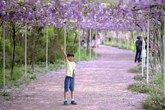 DSCF1397 (Shun Daddy) Tags: fujifilm xt2 mirrorless apsc 無反 富士 52mm f12 prime 定焦 bokeh 散景 nature 自然 flower 花 人像 portrait xf fujinon